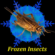 Frozen Insects
