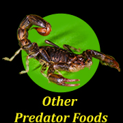 other-predator-foods